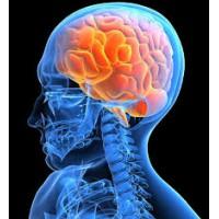 Как улучшить функции головного мозга?